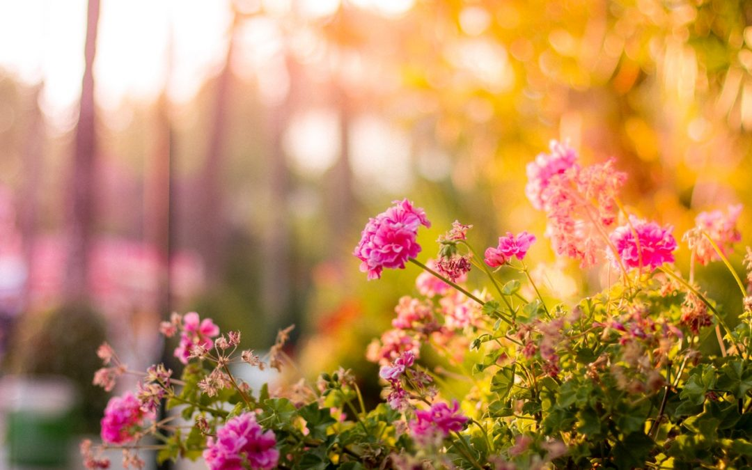 What to Use to Landscape Your Garden