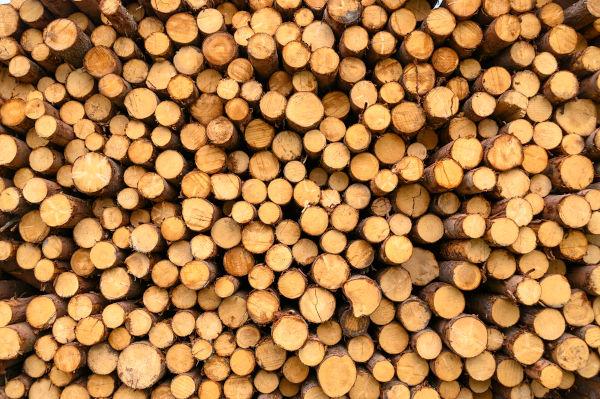 firewood06